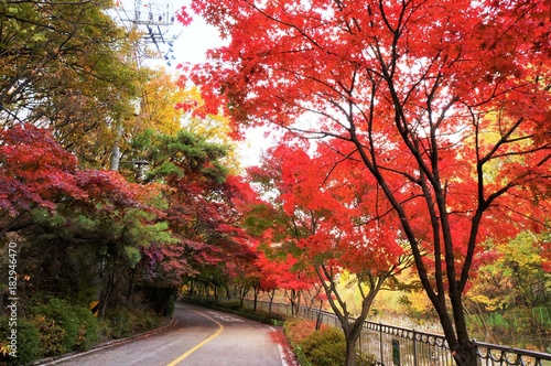 In de dag Seoel 秋の冠岳山自然公園・遊歩道