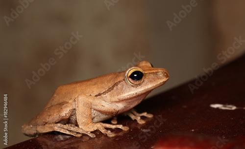 Fotobehang Kikker Frog posture on the white wall
