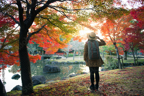 Sticker Tourist is looking at maple tree inside Nara Park during autumn in Japan.