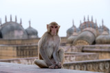 monkey in the monuments - 182955237
