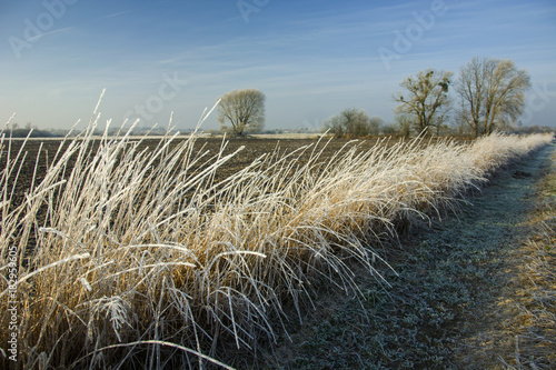 Foto op Canvas Gras High frosted grass near the road