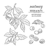 nutmeg vector set - 182968285