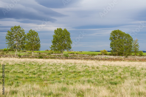 Fotobehang Lente Landscape with Meadows and Stone Fences in Spring