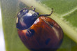 ladybug 9