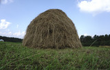 Hay bales in a field at - 182980076