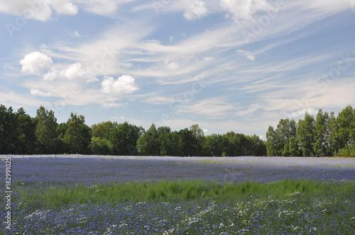 Foto op Canvas Wit Krajobraz