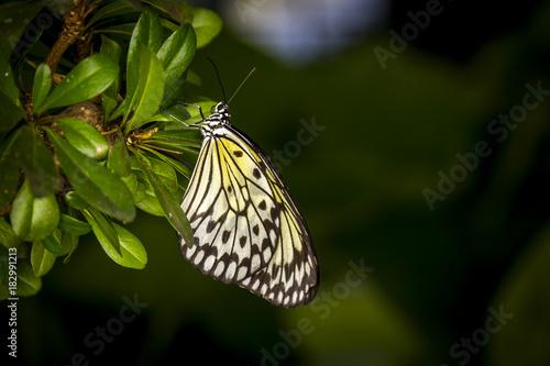 Fotobehang Vlinder Butterfly in a garden
