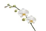 Orchidée et ses gouttes d'eau