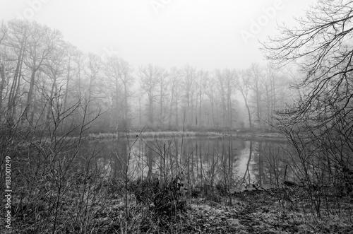 Aluminium Donkergrijs forêt de fontainebleau et mare aux évées en noir et blanc