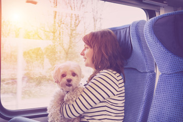 Dog traveling by train
