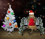 The cat in a Santa Claus hat with a bag of gifts sits on a bench near the Christmas tree decorated with multi-colored balls.