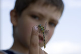 young boy and dragonfly - 183004291