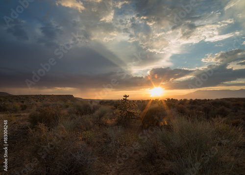 Foto op Canvas Chocoladebruin The setting sun back lights an occotillo cactus in the desert of Southern Utah.