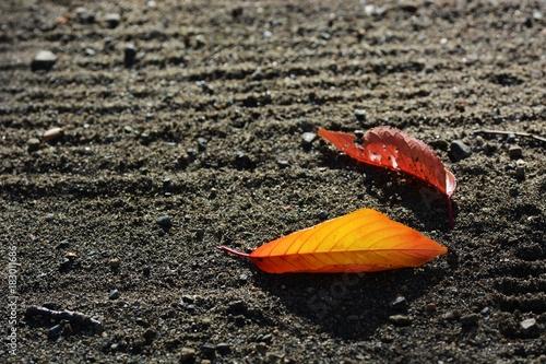 Foto op Canvas Grijs 落ち葉の季節