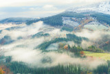 misty forest landscape - 183013696