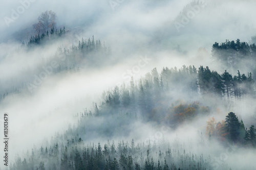 misty forest landscape - 183013679