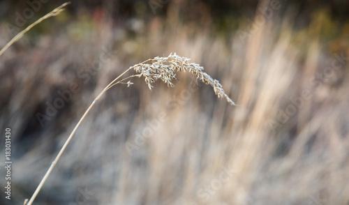 Wheat in the Field - 183031430
