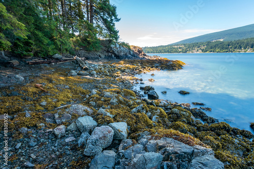 Poster Groen blauw brown seaweed covered shore line with trees