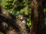 squirrel eating fruit on the tree under the sun - 183052057