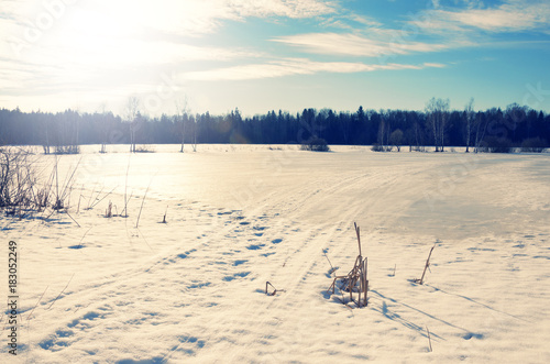 Fotobehang Lente Springtime.Sunny landscape with trees growing on the bank of frozen pond.Melting snow and ice.