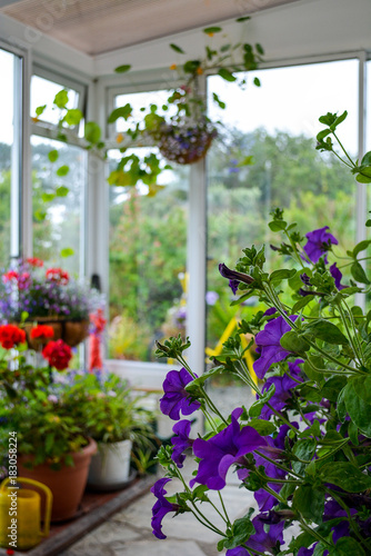 Flowers in a conservatory in summertime