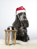 Cockerspaniel dog portrait with a Christmas hat. Image taken in a studio with white background.  - 183068483