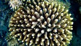 Red sea marine life - Very little fishes in a coral - 183069070