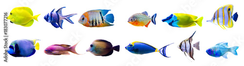 Fotobehang Koraalriffen Tropical fish collection isolated on white