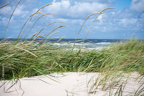 Plexiglas Noordzee Dunes and sea