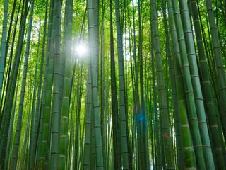 Bambus Hintergrund Wald Licht © prempict