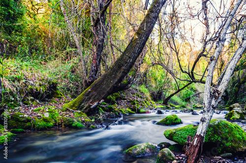 Fotobehang Weg in bos Sendero del Río Majaceite, entre El Bosque y Benamahoma, Cádiz