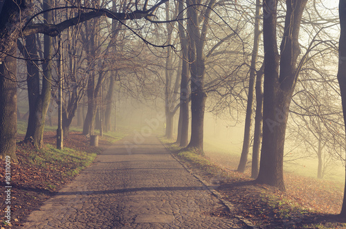 Foto op Canvas Beige Autumn tree alley in the park, fog, on a sunny day in Krakow, Poland