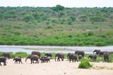 éléphant - 183122021
