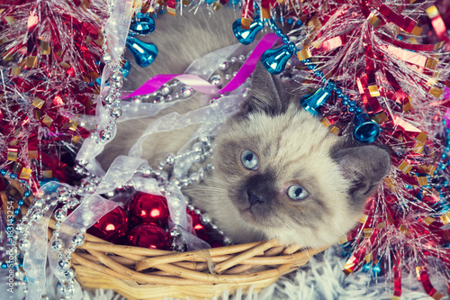 Little kitten in a basket with Christmas tinsel