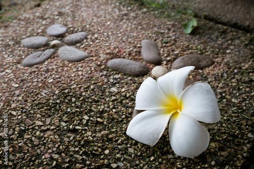 Plexiglas Plumeria Plumeria flower on stone floor