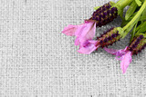 Lavender flowers on hessian fabric with selective color - 183165019