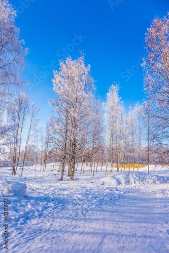 Papiers peints Bosquet de bouleaux Road in the snow-covered aspen grove