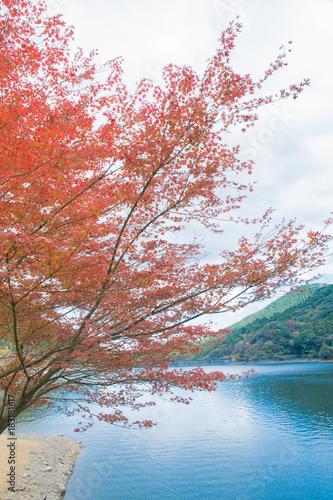 河内貯水池 秋の紅葉