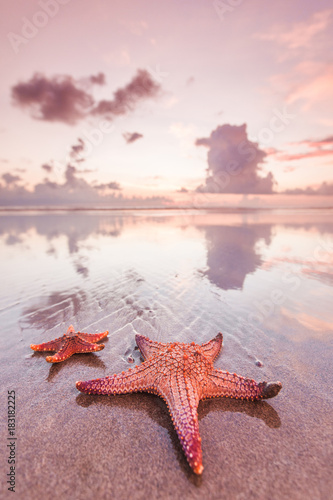 Foto op Aluminium Zee zonsondergang Two starfish on sea beach at sunset