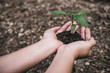 Quadro Hands holding soil and small tree to grow with blur background