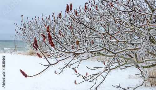 Aluminium Canada Winter