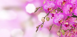 violet in stripes orchids banner with bokeh background - 183238478