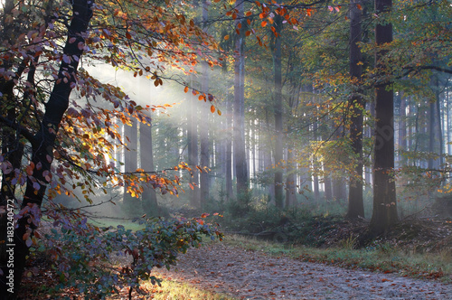 Sunbeams in misty autumn forest - 183240472