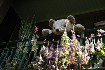 Teddy bear looking at you from Balcony at  Surry Hills, Sydney