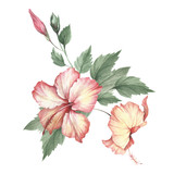 Composition with hibiscus. Hand draw watercolor illustration. - 183260228