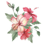 Composition with hibiscus. Hand draw watercolor illustration. - 183260246