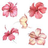 Set with flowers hibiscus. Hand draw watercolor illustration. - 183260274