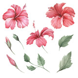 Set with flowers hibiscus. Hand draw watercolor illustration. - 183260282