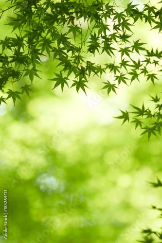 Foto op Aluminium Lime groen 生駒山の新緑