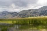 bamboo grove on mountain lake matese park - 183282875
